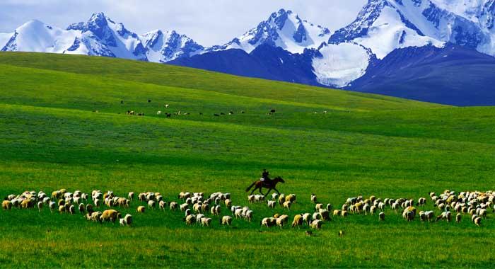 羊的成长周期